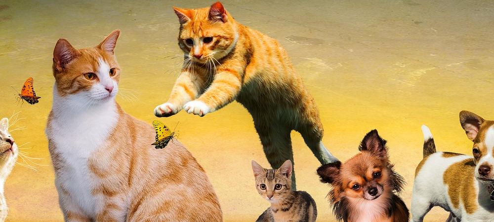 Tierbehandlungen